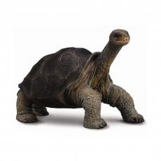 Абингдонская слоновая черепаха Collecta