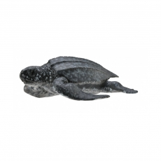 Фигурка Collecta Кожистая черепаха